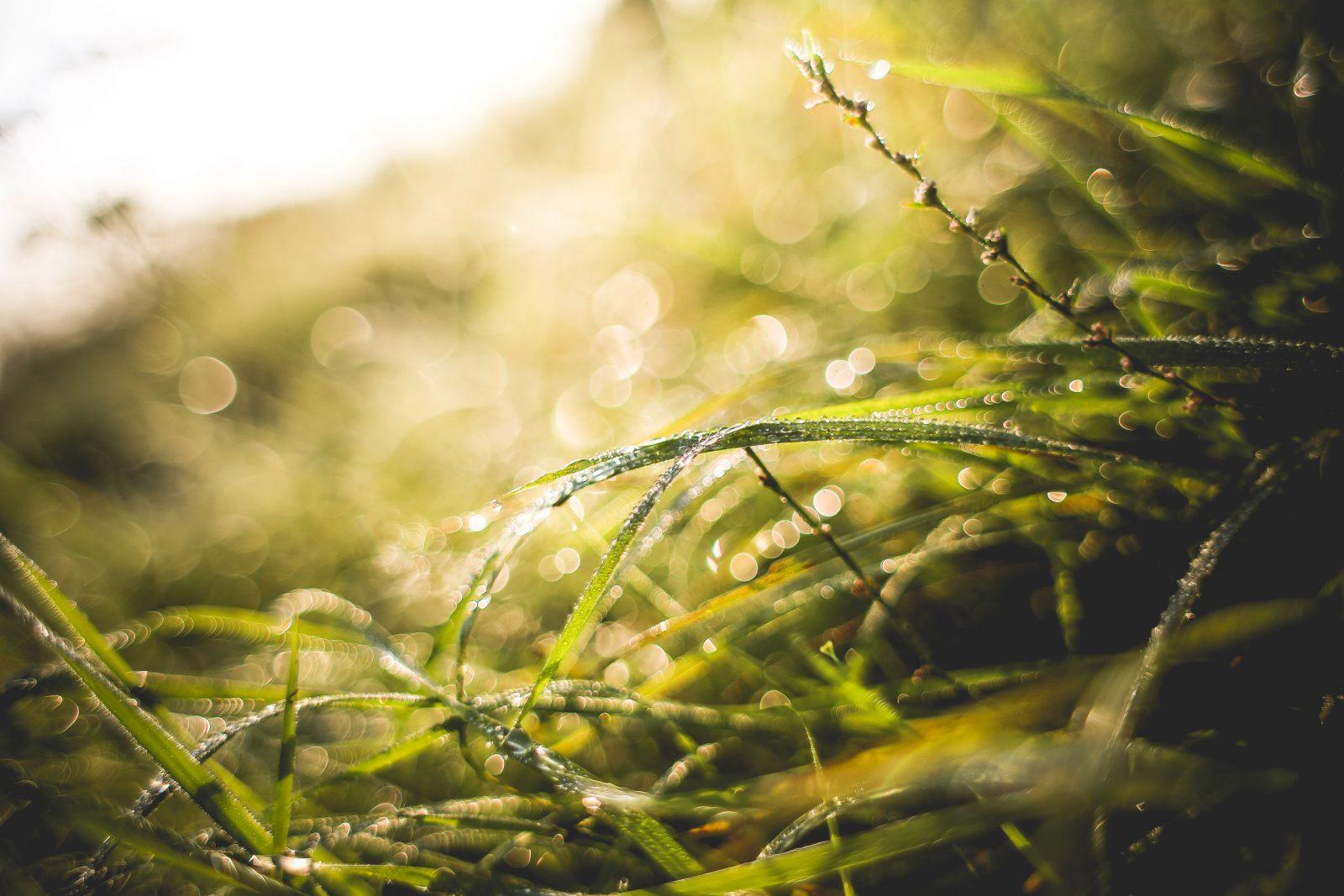 Wet-Grass